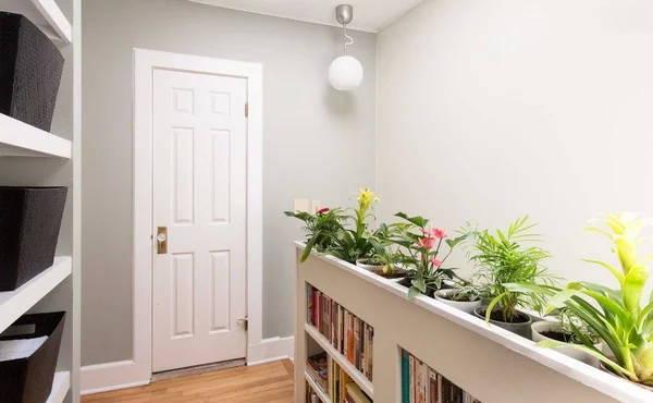 5 основных моментов с растениями в интерьере квартиры